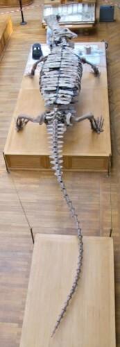 Sarcosuchus 0421