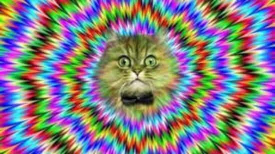 Les hallucinations sensorielles