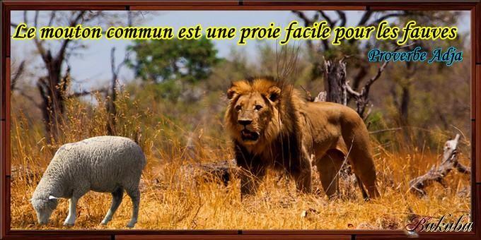 proverbe togolais