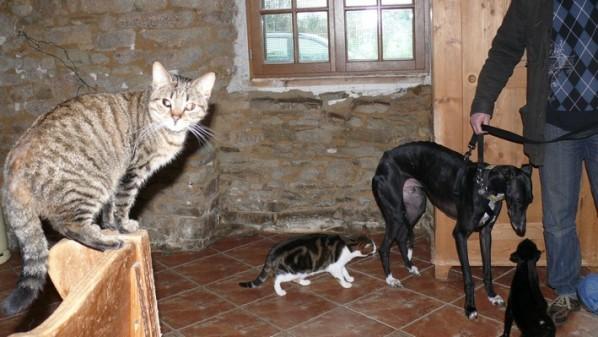 16-Ares-et-les-chats.jpg