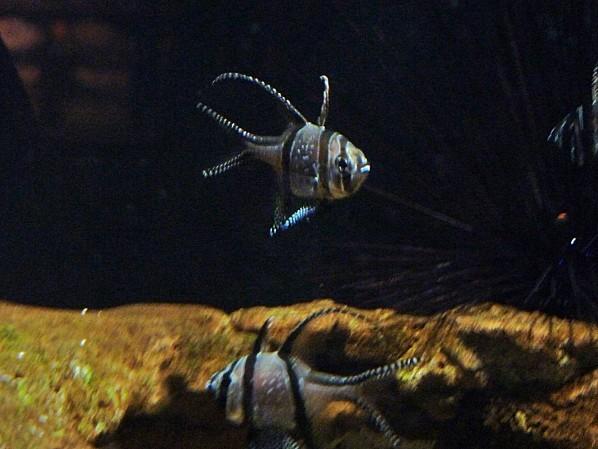 Jour 28 Vancouver aquarium 5