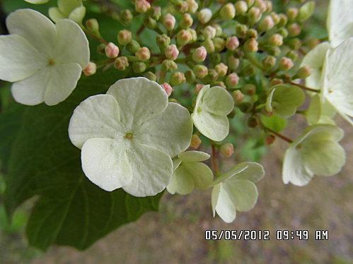 chat-pichon-et-fleurs-5-mai-006.JPG