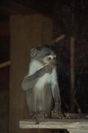 Zoo Osnabruck d50 2012 053