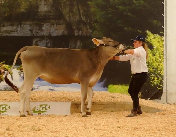 Les animaux aux Journées Châtillonnaises 2017