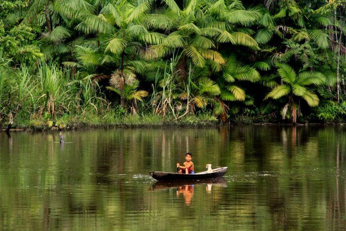 À La Découverte De la Biodiversité Du Brésil -  Expédition Au Pantanal Au Brésil   Publication - Par Les Biodiversitaires -