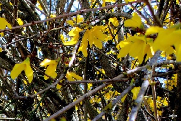 ay01---C-jaune.JPG
