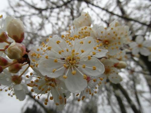 Arbre fleuri et jeu