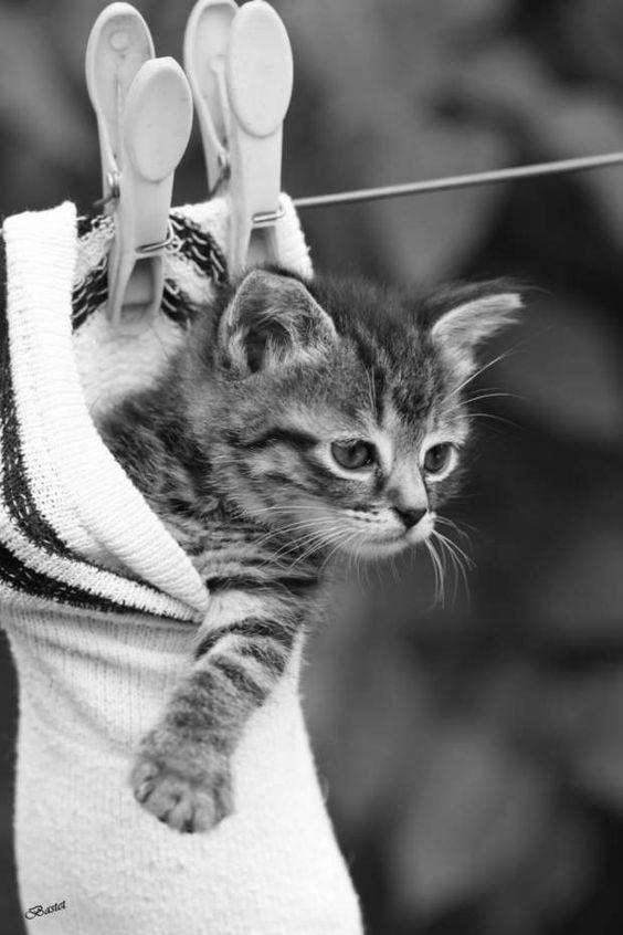 Photo prise par Bastet MEn 1963, une chatte nommée Felicette fut le premier félin à atteindre l'espace. L'animal embarqua à bord d'une capsule lancée par la fusée française Véronique. Felicette a rejoint la terre ferme saine et sauve.Trouvez la meilleure assurance pour votre animal de compagnie grâce à ce comparateur en ligneDécouvrez d'autres images de Bastet M: