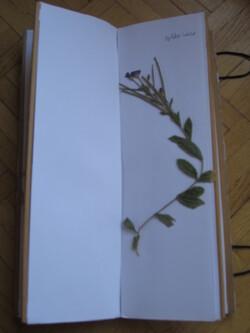 Herbier transportable - l'intérieur
