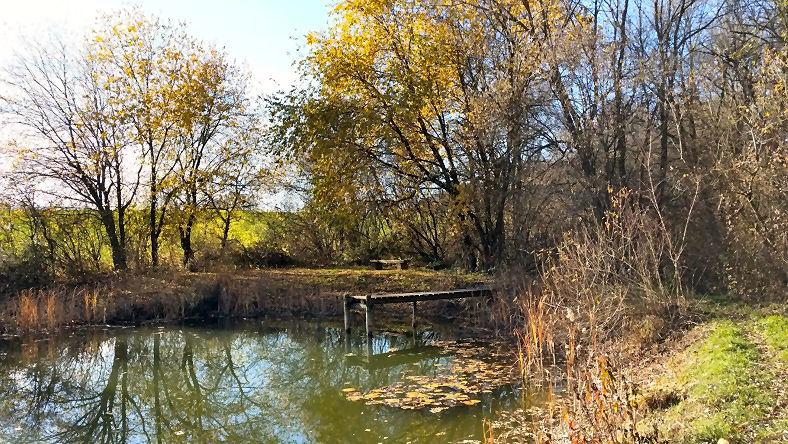 Un étang bien vivant.