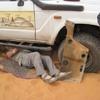 Mauritanie Sur la route de l'Espoir Plantage réparation