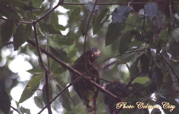 Citadelle : perroquet dans la forêt
