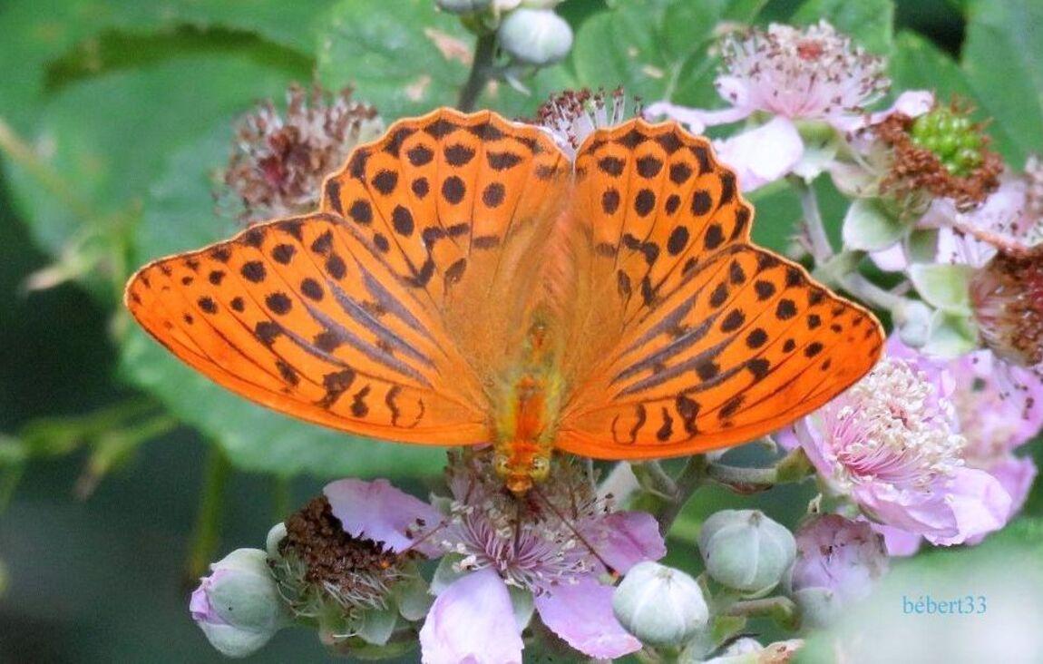 un papillon et fleurs