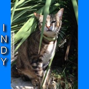 Chats perdus dans l'Aude