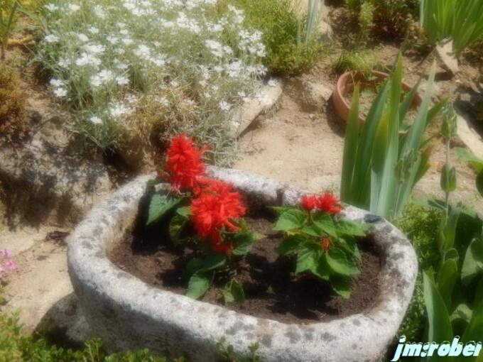 Deux journées fleurs ce 18 et 19 mai 2018 pour la plantation