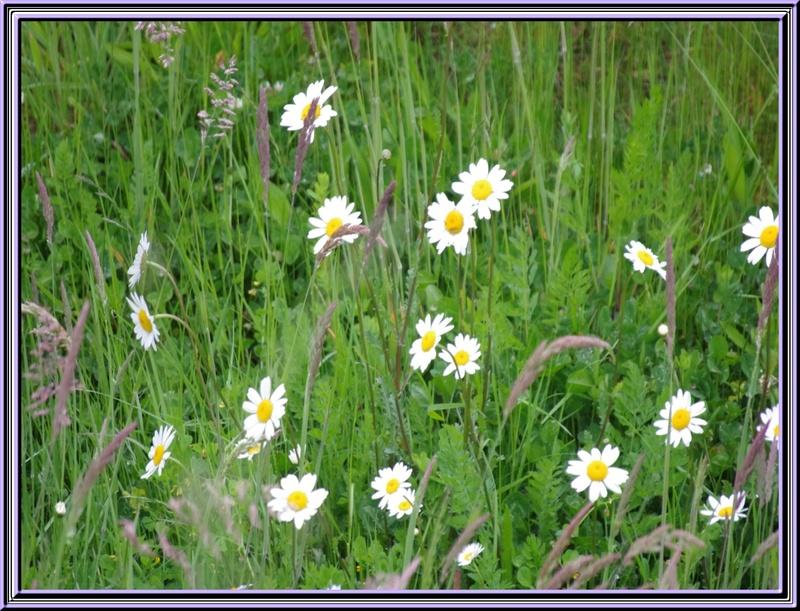 Belles fleurs rencontrées lors de nos vacances en Bretagne