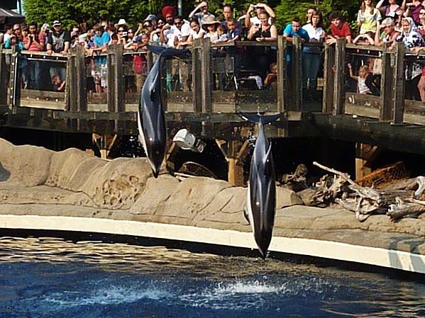 Jour 28 Vancouver aquarium dauphins 1