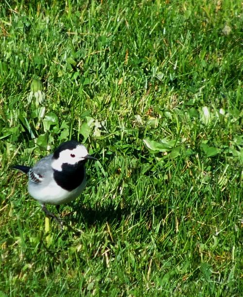 Les oiseaux de notre région