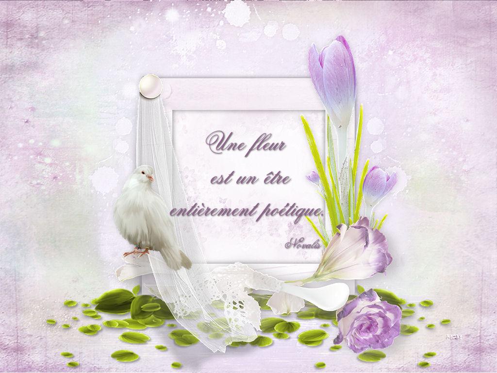 Fond D écran Citation Fleurs Mcreations