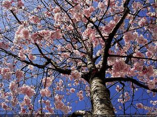 """Résultat de recherche d'images pour """"image sur le printemps"""""""