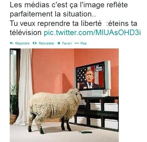 medias-moutons.jpg