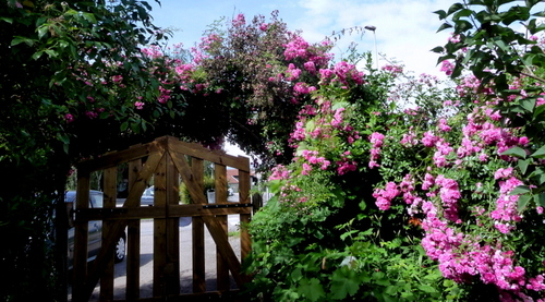 Jardins suite ...