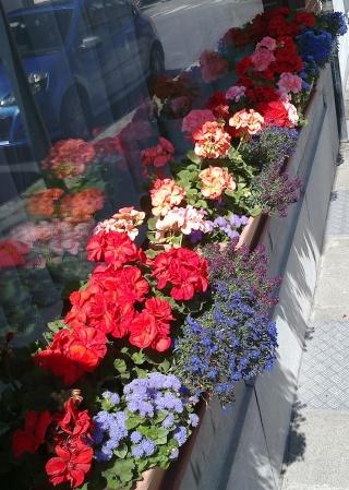 Façades fleuries de Woluwe(é). Aujourd'hui la rue du Zéphir