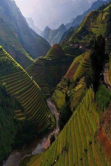 Quand les rizières deviennent oeuvres d'art ...