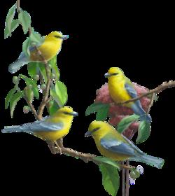 Mes petits amis, les oiseaux (t Lise)
