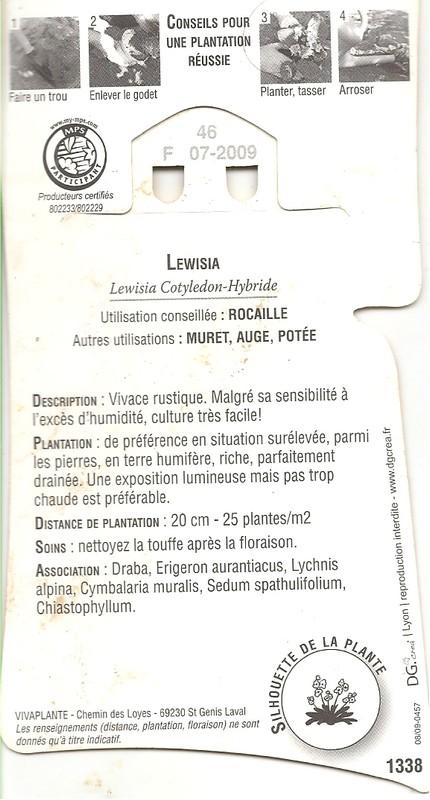 Lewisia