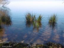 Une balade au Lac le 6 février (suite)...