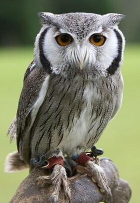 owl2.jpg
