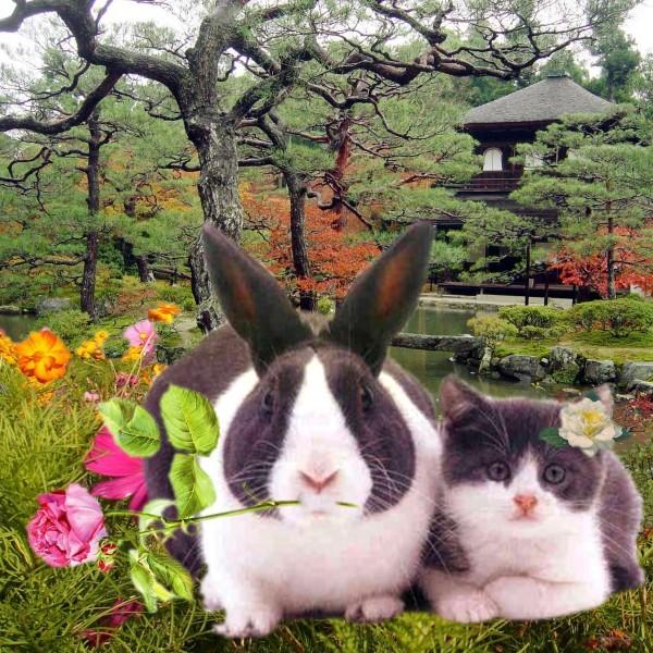 Le-lapin-et-le-chat.jpg