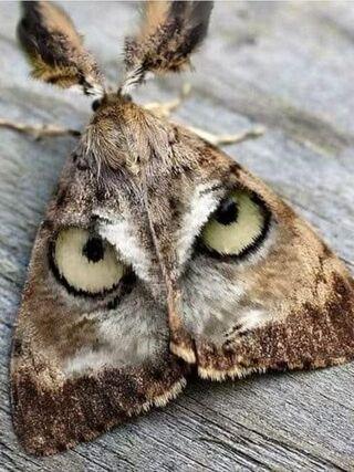 Papillon de nuit...