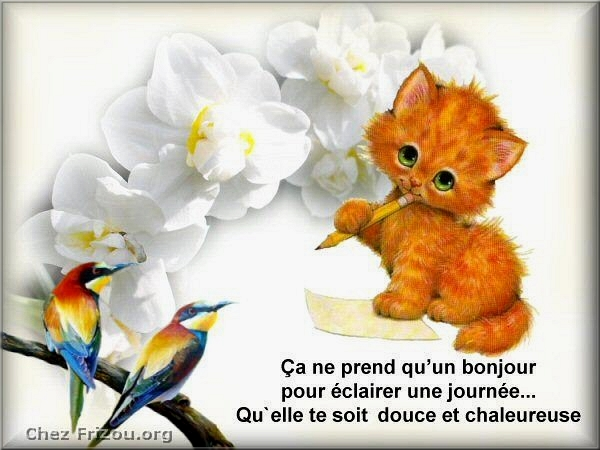 Chats ... Images - 2