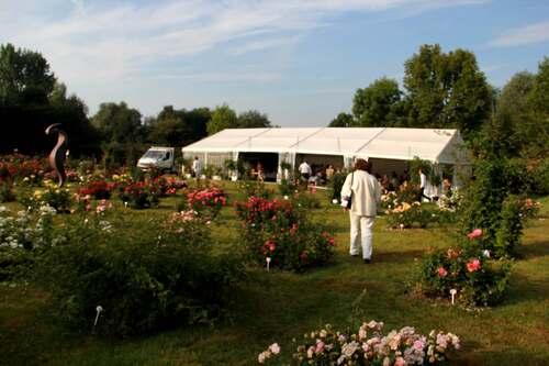 Concours international de roses nouvelles - Ville du Roeulx - 2013 (1/5)