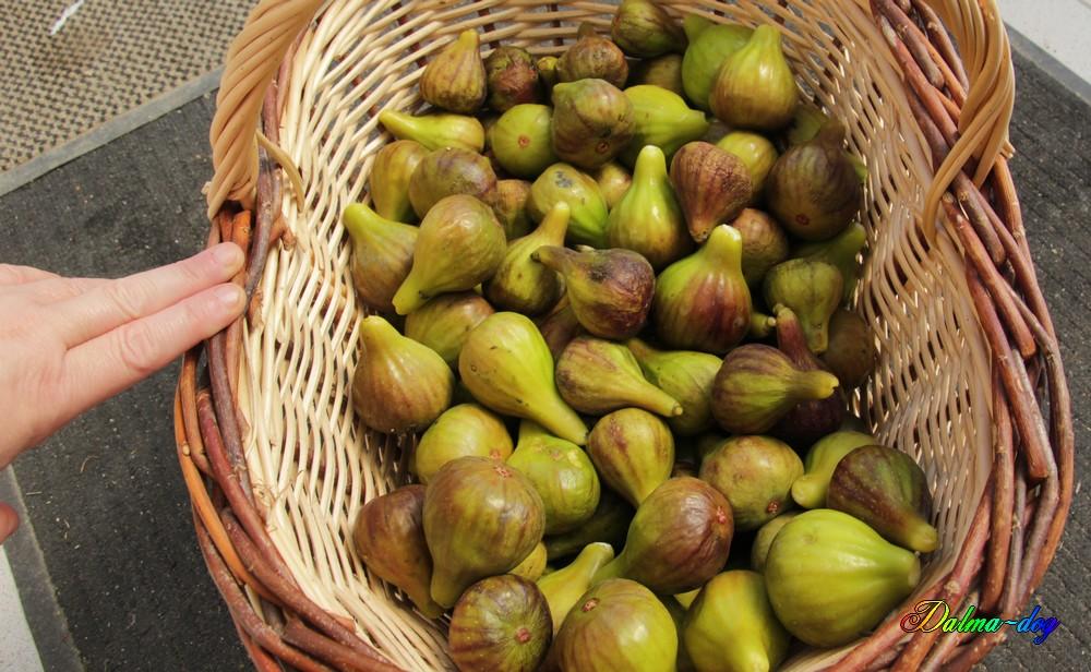 9 kg de figue plus les 2 kg de hier