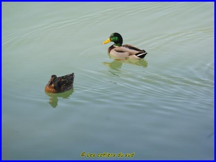 Luberon, l'étang de la Bonde