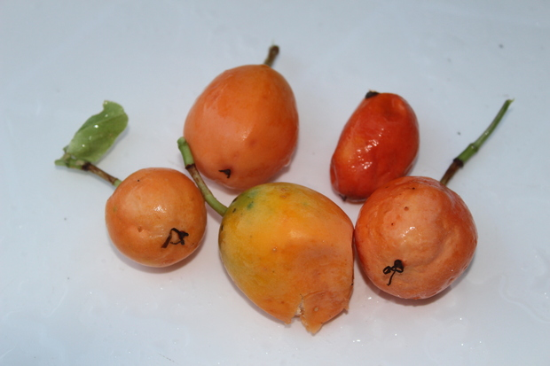 un fruit particulier
