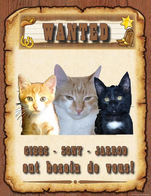 Sauvez mes chats Gibbs, Jarrod et Sony