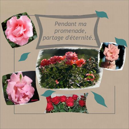 Mes_roses