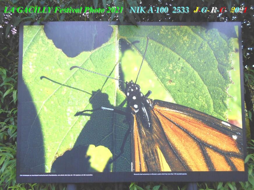 08 A. L. P. 2021 L-G:  PASCAL MAITRE Odyssée des papillons monarques 1/2  D  06-10-2021