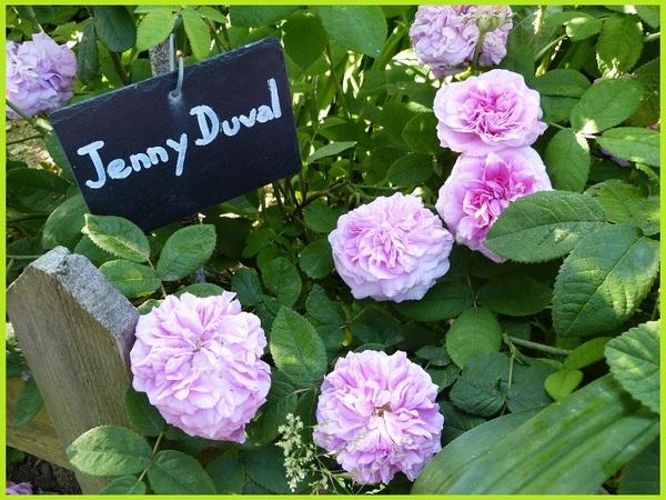 'Jenny Duval'