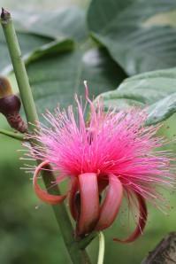 jardin botanique mars12 176