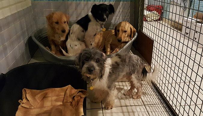 Entassés dans une caravane : une trentaine de chiens sauvés à Agde