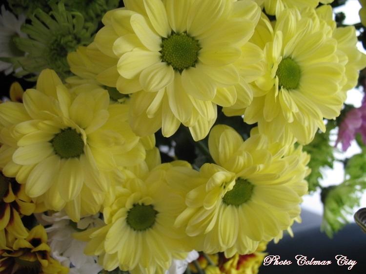 Des fleurs chez le coiffeur 35