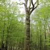 10_Morthéan_23_04_2011.JPG