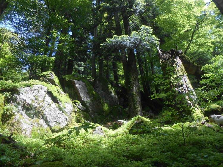 Vosges- hors sentier: pierres Vosgiennes.