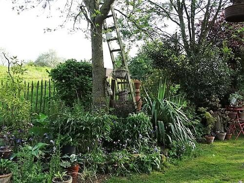 Quoi de neuf au jardin à la mi-mai?