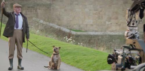 (-*♥ *-)  La chienne de refuge la plus « seule » du monde change de vie et devient une star à Hollywood